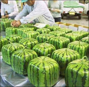 Cibo-OGM